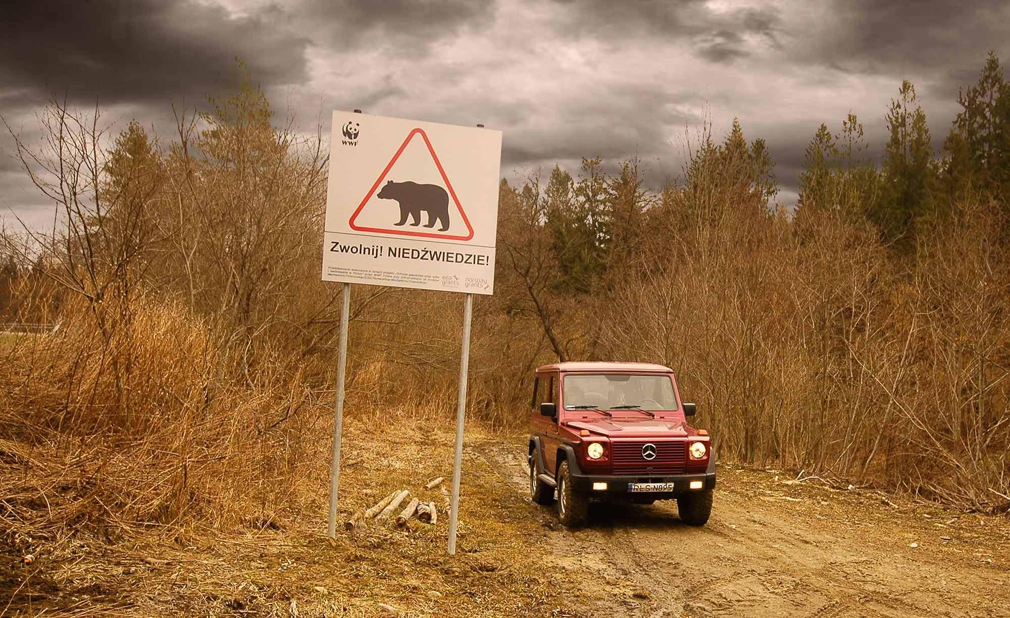Niedzwiedzie na drodze